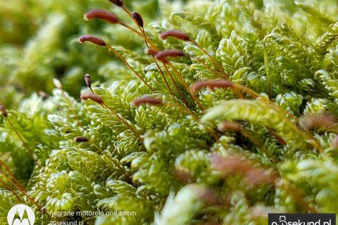 Zdjęcie z optycznym zoomem x3 z Motoroli One Zoom - 90sekund.pl - Michał Brożyński